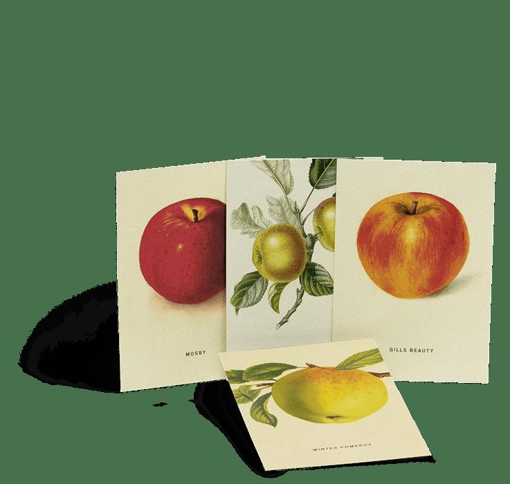 Postkartenset zu An Apple A Day Kalender 2020